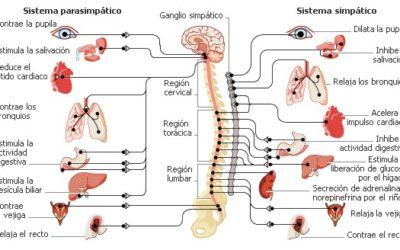 ¿Cómo afecta el estrés a nuestro cuerpo?