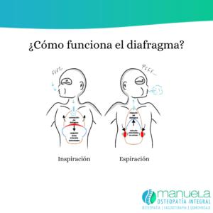 Función respiratoria del diafragma